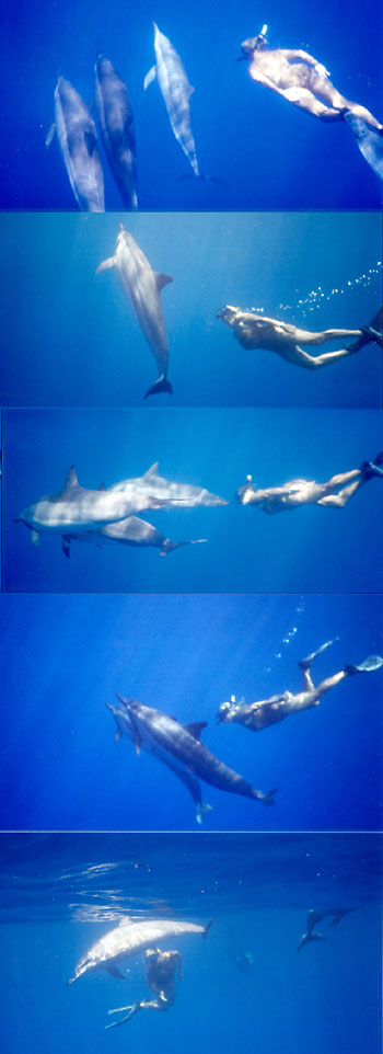 Swimming sequence
