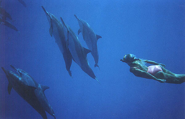 Joan with her dolphin family.Dolphin Connection.
